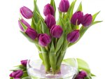 Purple tulips for my dreamer~sister♥