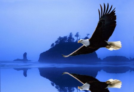 Reflected Eagle - bald eagle, flying, mirror, lake