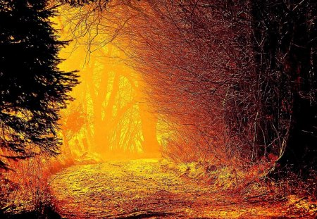 Autumn Sunlight - forest, rays, colors, fall, leaves, sun