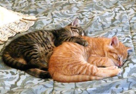 naptime - sleep, cats, dreams, nature, naptime