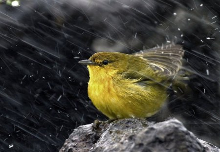 RAIN DANCE - gardens, birds, feathered friends, feathers, bath time, seasons, garden birds, weather, rain