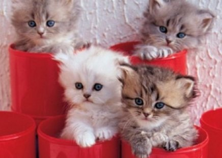 kittens in a red pots - kittens, animals, cats, red pots