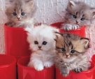 kittens in a red pots