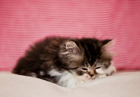 Cat - little, kitten, cute, nice, kitty, animals, cat