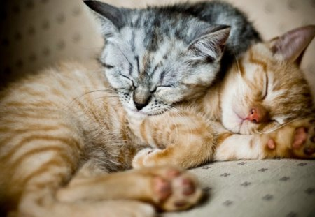 Cat - kitty, sleeping, cat, animals, nice, kitten, little, cute