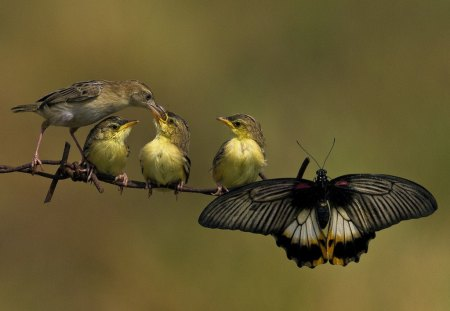 Special friends - wings, butterfly, food, birds, feathers, feeding, branch, eating, family, fence