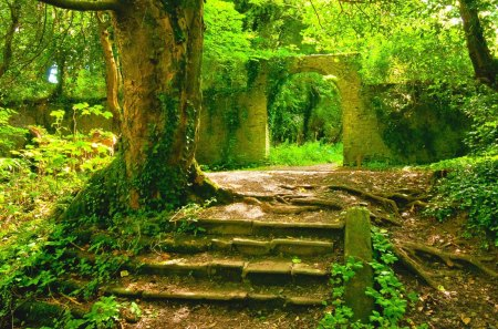 Stage - beautiful, door, stair, green, stone, color, fields, stage, amazing, forest, colors, trees, tree, plants, peaceful, awesome, nature, landscape