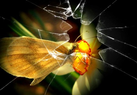 THE BROKEN GLASS - glass, butterfly, flower, cracks, splinters