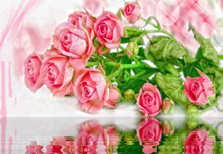 Pink roses reflection - harmony, pink, nice, roses, nature, beautiful, reflection, lovely, pretty, delicate, leaves