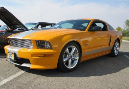 mustang - roush, saleen, for, mustang