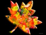 ♥     Maple Leaf     ♥