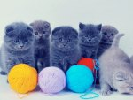 Kittens and tangles