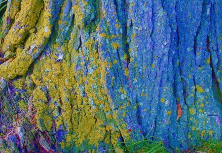 Mossy Tree - abstract, tree, texture, nature