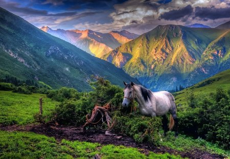 Horsing Around - beautiful, mountains, hillside, lush