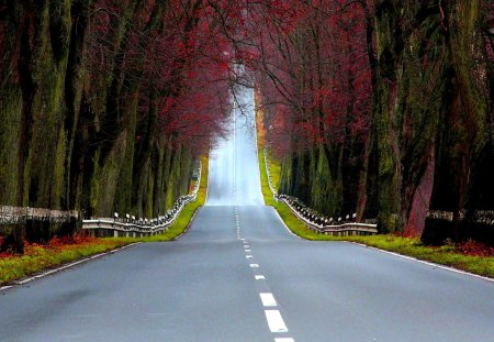 HIGHWAY to the NORTH - autumn, forest, empty, road, green, lane