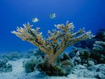 Our Amazing Underwater World