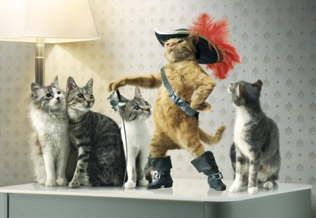 Puss-in-boots - boots, puss, cat, in, movie