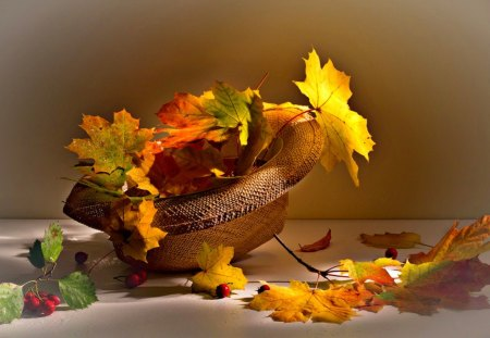 Autumn Leaves - pretty, autumn, lovely, autumn leaves, beautiful, hat, leaf, still life, leaves, photography, autumn colors, beauty, nature