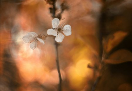 Flower - flowers, petals, fall, nature, flower, beauty, beautiful, lovely, pretty