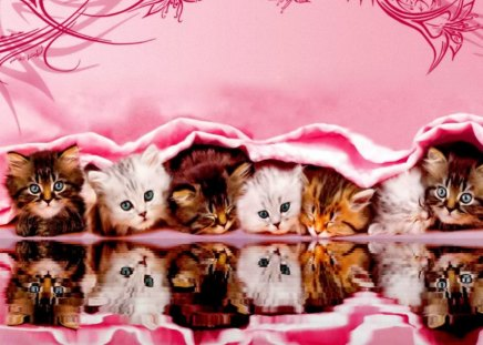 Kittens reflection - kittens, cats, buddies, pink, funny, friends, fluffy, cute, sweet, kitties, adorable, water, nice, photoshop, reflection, beautiful, lovely