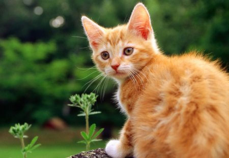 Red kitten - animal, cat, kitten, nature, trunck