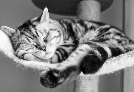 My weekend - kitty, look, adorable, cat, nice, funny, cute, humor, animals, sleping, kitten, pet