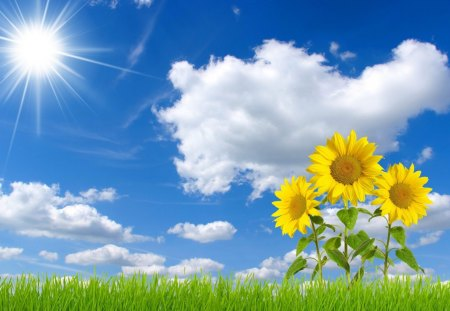 *** Beautiful blue sky and sunflowers *** - sunflawers, blue, nature, sky