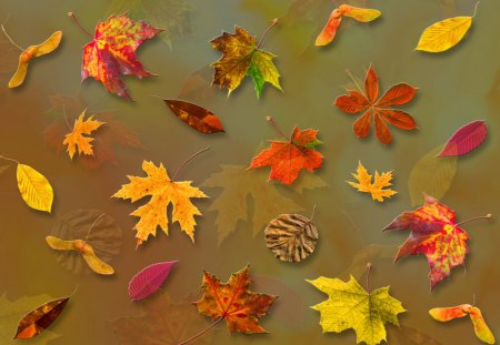 ♥     Falling Leaves     ♥ - autumn, abstract, fall, nature, collages, forest, falling leaves, park, leaves