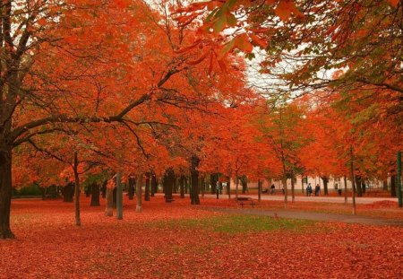 Red light - autumn, golden, tree, nature, red, leaves