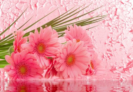 Pink gerberas - lovely, harmony, flowers, pretty, petals, beautiful, gift, amazing, pink, bouquet, wall, water, photoshop, delicate, nice, wet, gerberas, reflection