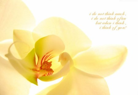 I think of you - life, orchid, quote, love, yellow, saying, you