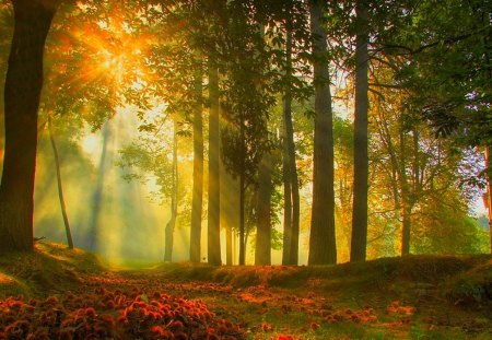 Morning fog - autumn, trees, fall, nature, forest, shadow, field, fog, morning