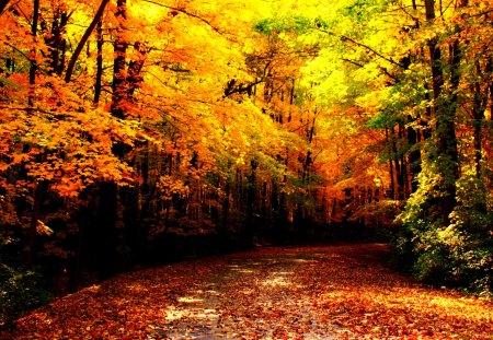 Beautiful Autumn - Des...
