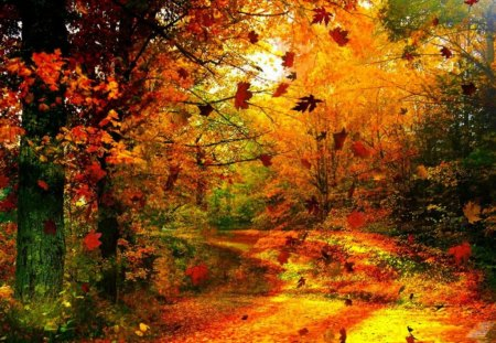 Autumn forest - colorful, golden, path, red, forest, park, sunny, autumn, colors, nice, nature, trees, beautiful, lovely, foliage, pretty, leaves