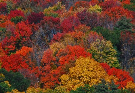 New England Fall Colors Other Nature Background Wallpapers On Desktop Nexus Image 1188787