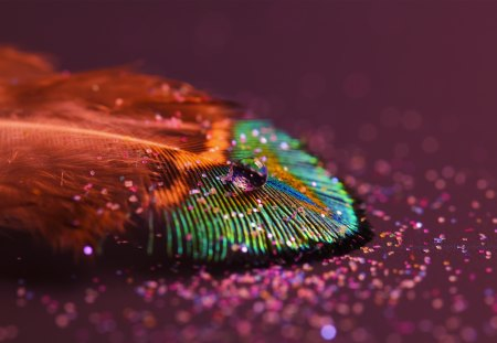 Feqatherlight - featherlight, water, drops, feather