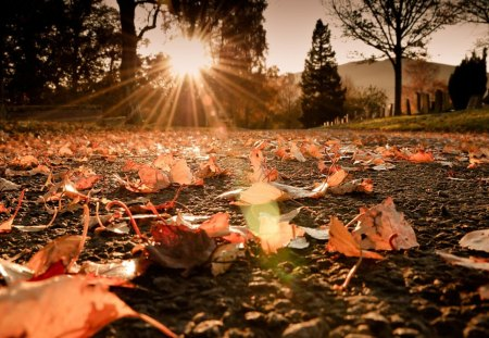Autumn Sunshine - amazing, september, golden autumn, yellow, beautiful, park, leaves, path, nature, alley