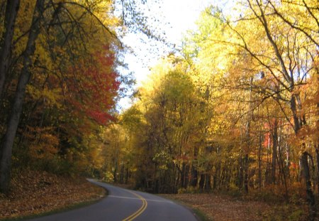 smokey mountains, tn - fall, forest, trees, road, nature, mountain