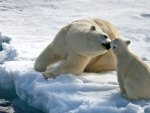 Bear Mothers Love