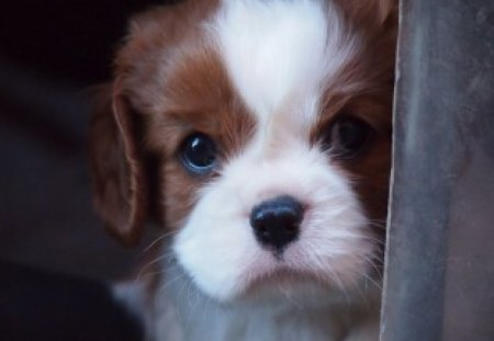 * Cute and lovely * - cute, lovely, adorable, eyes, puppy, dog, animal
