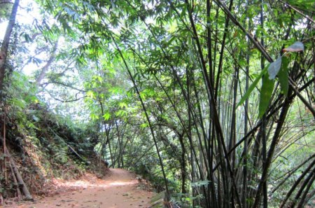 Bamboo Forest Trail Forests Nature Background Wallpapers On