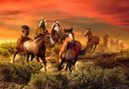 The wild bunch - grass, brown, meadow, fiery, ride, fire, bunch, sky, nice, nature, beautiful, lovely, horses, clouds, field, wild, wilderness