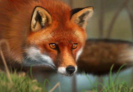 Red Fox - Other & Animals Background Wallpapers on Desktop ...