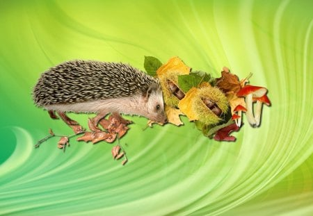 Adorable little hedgehog - animal, hedgehog, nature, mushroom, autumn