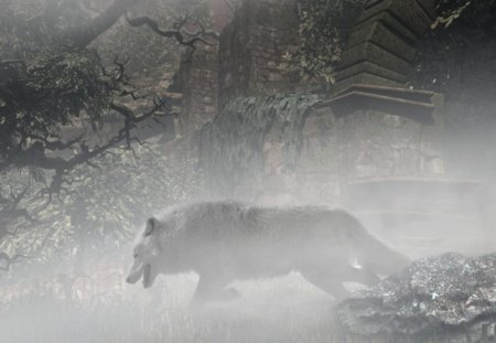 IN THE FOG ... - silend, wolf, animals, fog, bw, nature, wp