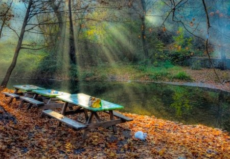 Autumn in the park - forest, fall, autumn, tree, list, bench, park, cat