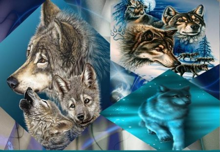 Wolves Wallpaper Other Animals Background Wallpapers On Desktop Nexus Image 1194934