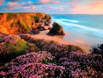 Coast Flowers