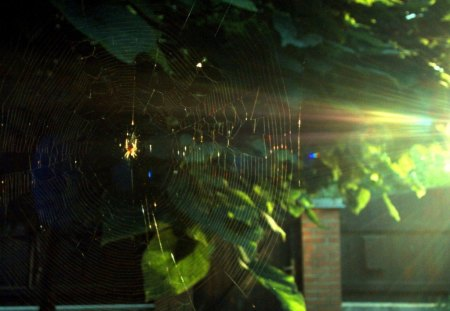GOLDEN WEB - evenings, homes, silk, spiderwebs, outdoors, lights, leaves, critters, plants, spiders, gardens