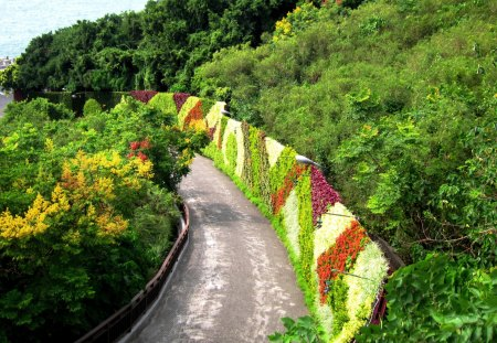 The floral wall displaying Trail - plants, trail, floral wall displaying, tree